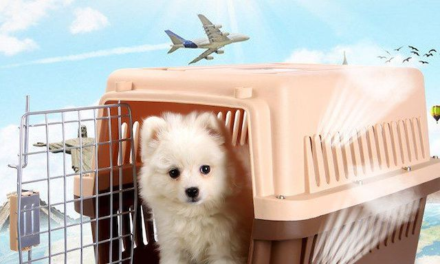 Acessórios para transporte de animais Online
