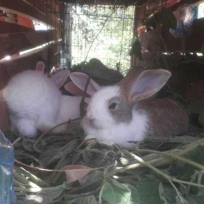 Thỏ con Profile Picture