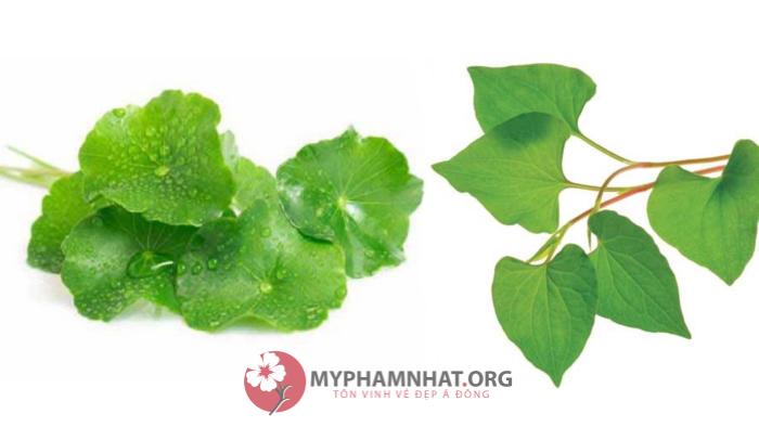 Mách bạn cách dùng rau má trị mụn tuyệt vời có thể bạn chưa biết - Mỹ phẩm Nhật